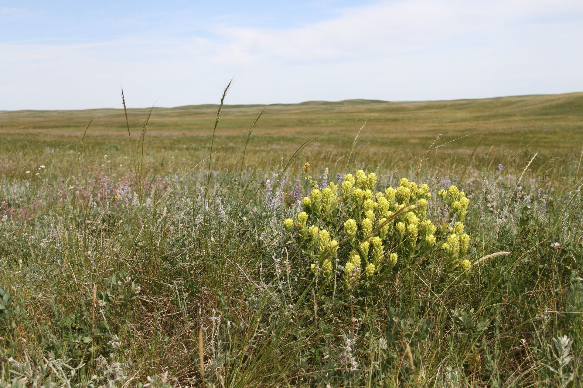 Milk River Ridge Grassland Photo