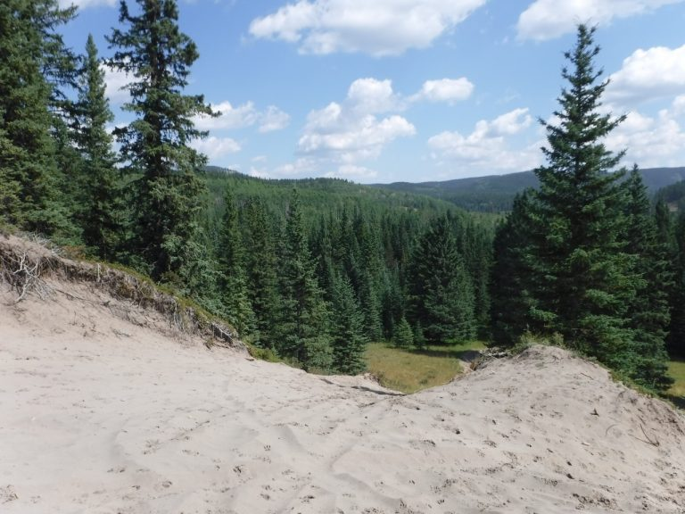 Sandhills landscape