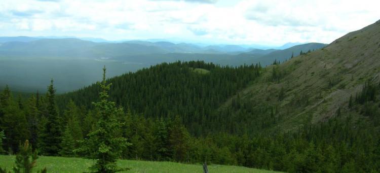 Ram Ridge Landscape